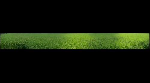Nagamine Rice Field