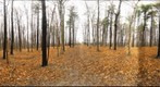 Dairy Bush GigaPan - 118 - November 23 2011