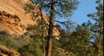 Zion tree Epic 100 CS5 test 1