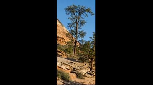 Zion tree Epic 100 CS5 test 1