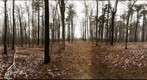 Dairy Bush GigaPan - 119 - November 30 2011