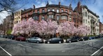 Commonwealth Ave, Boston, Massachusetts in Spring