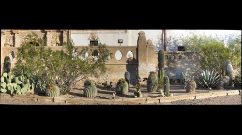 San Xavier Mission Cactus Garden