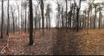 Dairy Bush GigaPan - 120 - December 07 2011