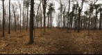 Dairy Bush GigaPan - 121 - December 14 2011