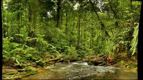 Cikaniki Stream, Indonesia