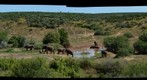 Addo Elephant Park
