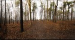 Dairy Bush GigaPan - 122 - December 22 2011