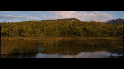 Swans on Potter Marsh, Anchorage, Alaska