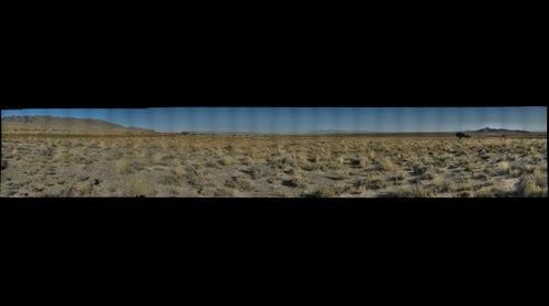 Salt Desert Shrub