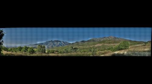 Mountain Brush