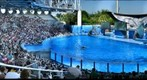 SeaWorld Orlando, Shamu 1