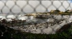 Seals at Hopkins Marine Lab, Pacific Grove, CA