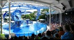 SeaWorld Orlando, Dolphin Show 1