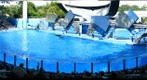 SeaWorld Orlando, Shamu 2