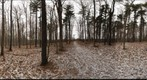 Dairy Bush Gigapan - 126 - January 25 2012