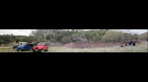Jeeps and Roses