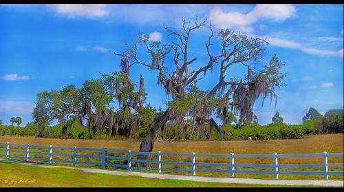 Tree on Sawyer Loop