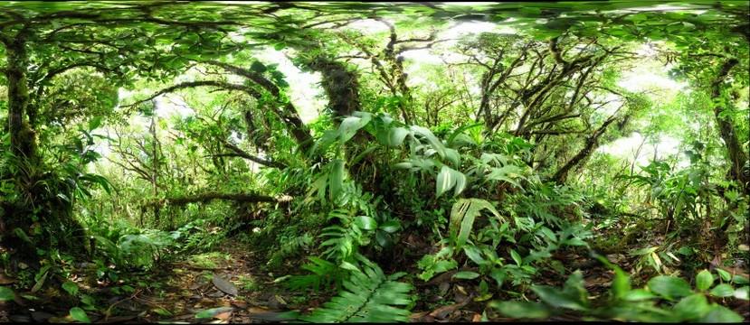 120218 - Costa Rica, Area de Conservacion (ACG), Volcan Cacao, Cima del Volcan, 1500m