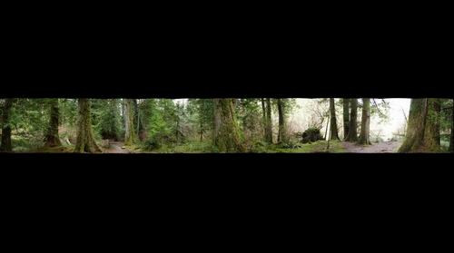 Cathedral Grove 360 degree pan