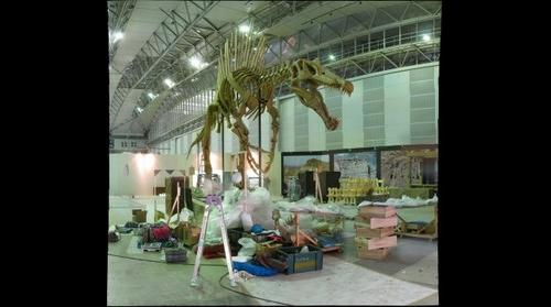 Reconstructed skeleton of Spinosaurus during installation, Dinosaur Expo 2009, Tokyo