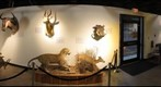 GMNH GALLERY PANORAMA