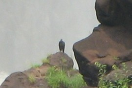 bird on a rock?