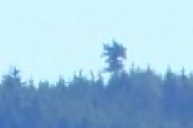 Drzewko Kazika
