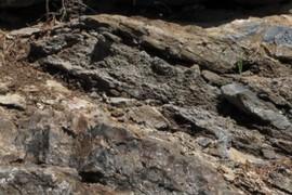 Stromatolie