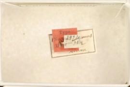 Compsodryoxenus brunneus Ashmead