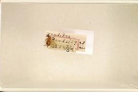Rhodites californicus Beutenmuller
