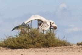 Esqueleto de ballena