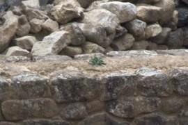 flower stone