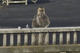 Chewbacca and the Pigeons.