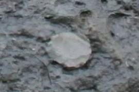 Worm burrow