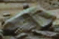 338440-210x140