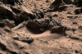Fossil Maxilar?
