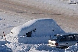 car camouflage