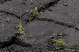 Plants in the cracks