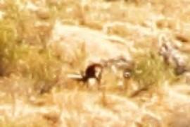Un ciervo