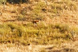 Otro ciervo
