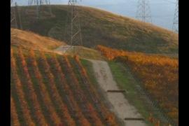 Vine-Road