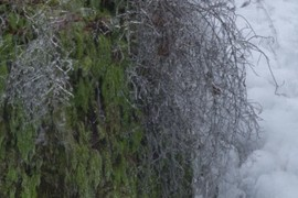 Ice on the branches