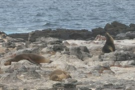Sleepy sea lions