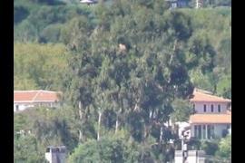 Poor Clares Monastery