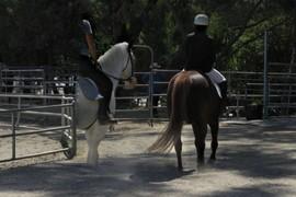 Horse Plus