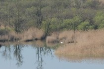 67619-210x140