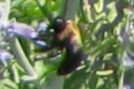 NEARBYNATURE BEE