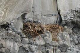 raptor nest