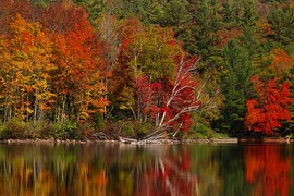 Beautiful trees of various colors.